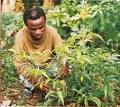 IBOGAINE -- The Magic Plant That Could Cure Addiction, Still ...