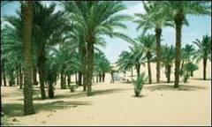 Argélia negocia libertação de turistas europeus no Saara | BBC ...
