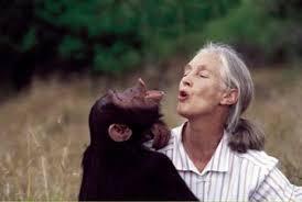 Jane Goodall : 'Nous sommes ce que nous mangeons' Images?q=tbn:ANd9GcQzDbtrh4ewfaThwgCOTLhoaEqzgzuYqDLWQh2-X0jazTLCO7Orkg