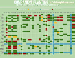 companion vegetable garden layout a kinda quick guide to companion planting u2013 erica rascon
