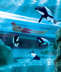 seaworld black friday deals a day at discovery cove now includes admission to seaworld orlando