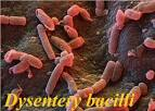 ou <b>Disenteria bacilar</b>