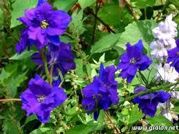 الزهور ونباتات الزينة, Images?q=tbn:ANd9GcR-gZ-Sjjtu6VN0cpD407qAxQ3mGwvruIK2qPdneK_7zB82pFdYpQ