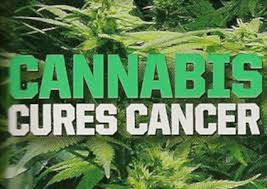 Can Marijuana Kill Cancer?