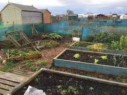 Manure For Vegetable Garden by Green Manure Why You Should Grow These Crops In Your Vegetable