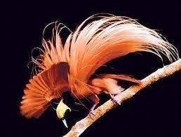 Las aves del paraiso imperdible