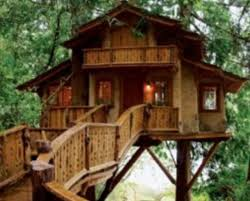 live in tree houses this live in tree house has all the