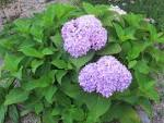 New Shrubs to Identify: Garden Bloggers Bloom Day August 2012 ...
