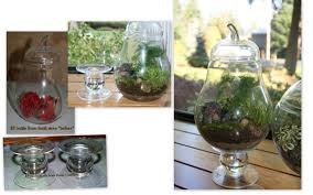 glass container gardening gardening ideas