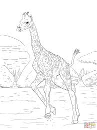 giraffe eating banana coloring page free printable coloring pages
