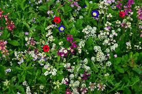 Second Nature Landscaping by For Wildflower Week Design A Mini Wildflower Garden Second