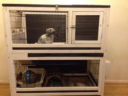 177 best bunny images on pinterest rabbit cages animals and