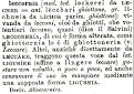 leccornia