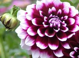 Las flores que nos gustan. Images?q=tbn:ANd9GcR4hqF8Azzq3AgqQP5stzjPGIRjkIoHp9MusKXGMx_kFMYI_5rHUQ