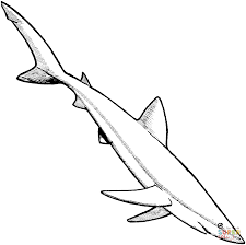 blue shark coloring page free printable coloring pages
