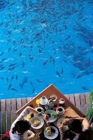 225 best dream vacation bora bora images on pinterest the