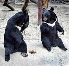原创--童话之十六:黑熊大笨的日子 - 清音 - 清音