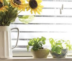 starting a spring vegetable garden indoors
