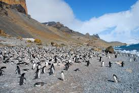 Be Free Too     Antarctica