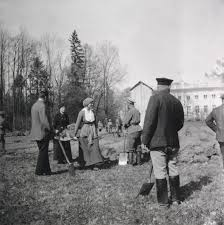 execution of the romanov family wikipedia