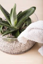 Succulents Pots For Sale by How To Water Succulents Without Drainage Succulents And Sunshine