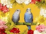 Animals Wallpapers Birds Desktop Backgrounds (wallpapers DesktopWallpaper Animals Birds budgerigars normal Backgrounds arts 1600x1200)