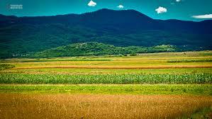 Poljoprivreda Images?q=tbn:ANd9GcR9f-uE8Q2U3DvE15FKXhTMtUfjLF0Cl1eNLSZxwCihqv4Zl5ULAA