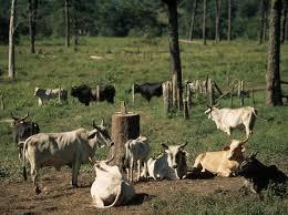 Deforestation   Threats   WWF World Wildlife Fund