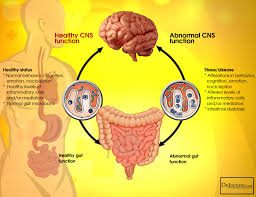 is the gut brain skin axis to blame for anxiety and acne