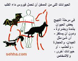 داء الكلب في صور  Images?q=tbn:ANd9GcRArpmolgvSWFp4q52ePalzcIWSN35vkrCnRCeo8jYTZ2J3jswsLQ