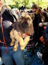 buy a affenpinscher the top u201cstar wars u201d inspired dog names u2013 iheartdogs com