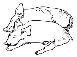 a pig with many pigs coloring pages coloring home