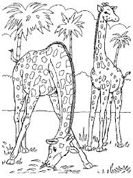 giraffe coloring pages realistic realistic coloring pages free