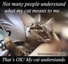 My cats are my children  I don     t expect anyone to understand the bond I have with them  Public opinion doesn     t matter to me anyway  Pinterest