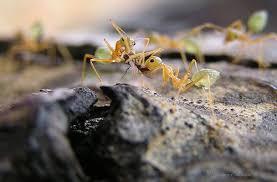 حتى النمل يحسد
