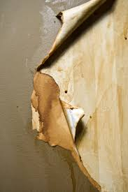 Cleaning Grease Off Walls by How To Prepare Walls For Paint After Removing Wallpaper Home