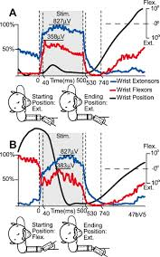 Belly Mapping Hijacking Cortical Motor Output With Repetitive Microstimulation