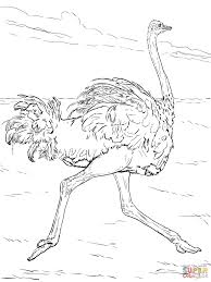 ostrich coloring page ostrich coloring pages free coloring pages