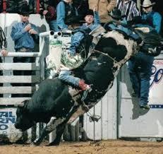 NWSS Bull Rider