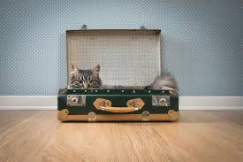 Diy Home Projects by 9 Stylish Diy Home Decor Projects Using Vintage Suitcase