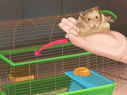 3 ways to give your hamster a bath wikihow