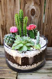 Succulents Pots For Sale by Planting A Simple Cacti Garden U2013 A Beautiful Mess