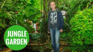 grandfather transforms back garden into rain forest youtube