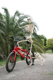 Halloween Skeleton Props by 214 Best Halloween Skeletons Images On Pinterest Halloween Stuff