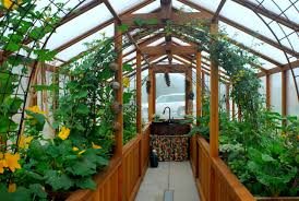 best of both worlds all you need to know about greenhouse grows
