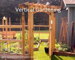 companion vegetable garden layout maple grove square foot and vertical gardening