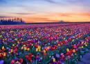 ทุ่งดอกไม้