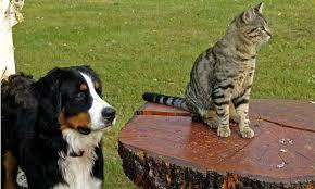 Veja cuidados para prevenir o câncer de mama em cães e gatos ...