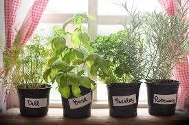 indoor windowsill herb garden gardening ideas