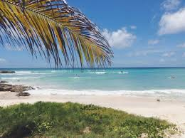 surf blog best beginner surf beaches in barbados